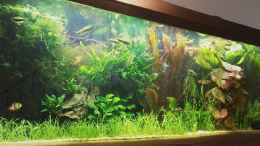 aquarium-von-zebraschneggla-gardeners-pleasure_...5...