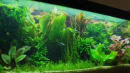 aquarium-von-zebraschneggla-gardeners-pleasure_...7...