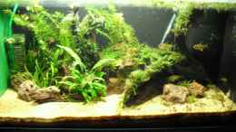 aquarium-von-mica-amazon-inspire_