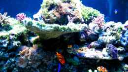 aquarium-von-malawigo-sunshine-coast_