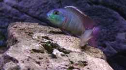aquarium-von-spaceace-malawi-1_