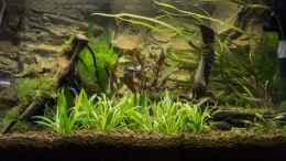 aquarium-von-hardflip-54l-naturbecken_18.07.2012