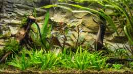 aquarium-von-hardflip-54l-naturbecken_01.08.2012