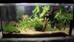 aquarium-von-mitch22-platy-station_