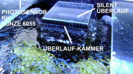 aquarium-von-the-lizardking-the-black-island-reef-obsolete_Überlauf