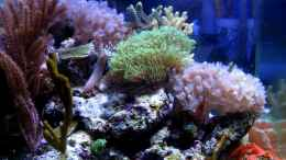 aquarium-von-maclya-small-blue-reef_