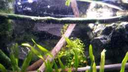 aquarium-von-newbie-newbies-waterworld_Moorholz