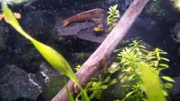 aquarium-von-newbie-newbies-waterworld_Newbies`s Waterworld