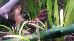 aquarium-von-newbie-newbies-waterworld_Newbie`s Waterworld