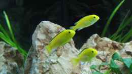 aquarium-von-wsp-malawi-200-liter_Yellow