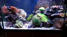 aquarium-von-theno-nos-reef_