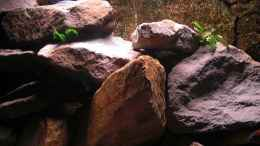 aquarium-von-kai-pragal-mbuna-rocks_