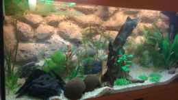 aquarium-von-kuebiwhv-tank-nation_von links