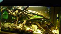 aquarium-von-dave88-neon-biotope-and-tourists_15.05.2011