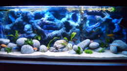 aquarium-von-james-jones--malawi-becken-_-M-A-L-A-W-I-SEA-L-I-F-E-