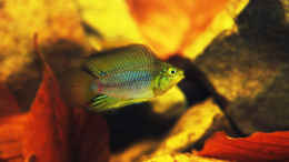 aquarium-von-cichlid-power-kellerbecken_