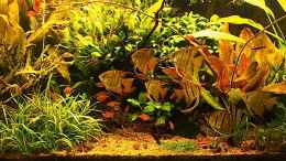 aquarium-von-diveman-red-green-dream_Februar 2012