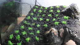 aquarium-von-microsash-under-the-bridge_linke erstbepflanzung