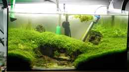 aquarium-von-microsash-under-the-bridge_zwischenreinigung