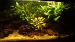 aquarium-von-mr--l-p--small-creek_