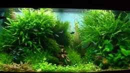 aquarium-von-volkmar1-rio-world_am 20.10.2012