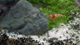 aquarium-von-mike1963-crystal-rock_RedBee