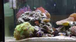 aquarium-von-dominik-n--becken-22455_Riffsäule links 10/2012