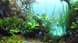 aquarium-von-guppy62-the-green-dream_dito
