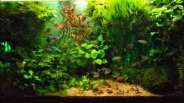aquarium-von-guppy62-the-green-dream_