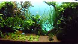 aquarium-von-guppy62-the-green-dream_Mit blauem Hintergrund