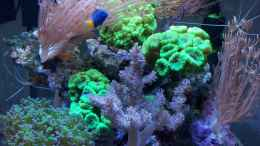 aquarium-von-garnelenhunter-nano-high-tower_Handy pics vom  20.05.2012