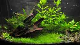 aquarium-von-rodsnase-green-revolution_