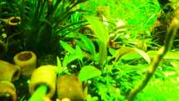 aquarium-von-walde-cube-60_links 20.01.2013