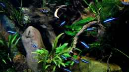 aquarium-von-snooze-little-dschungel_25.07.2014