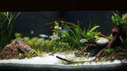 aquarium-von-david-b-first-aquascap_Becken (Stand: 13.04.13)