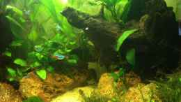 aquarium-von-spanky-cruz-south-america-landscape_Besatz 13-01-04