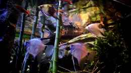 aquarium-von-snooze-new-underwater-world_27.12.2013
