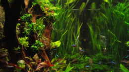 aquarium-von-gg-phoenix_2014-10-18_von links