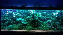 aquarium-von-steven--mueller-lowtech-naturescaping_September 2015