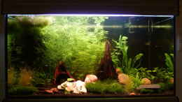 aquarium-von-jan-marc-128l-garnelenparadies_