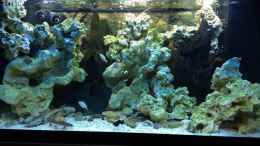 aquarium-von--jwoww--brackwasserbecken_