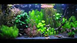 aquarium-von-michael-z--planted-world_