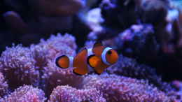 aquarium-von-christopher-schoener-red-sea-max-130d_Red Sea Max 130d