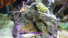 aquarium-von-red--juergen--fluval-reef-m40_Simbiose