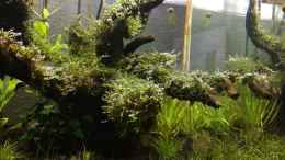 aquarium-von-ayahuasca-i-love-leaves-_nach WW