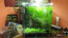 aquarium-von-joe-waters-it039-s-not-the-size-that-matters_
