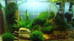 aquarium-von-joe-waters-in-the-depth-of-silence_