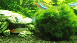 aquarium-von-aqua-david-the-neighbor-tank_...
