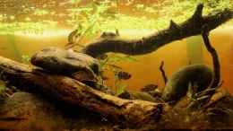 aquarium-von-lomarraco-two-forests_