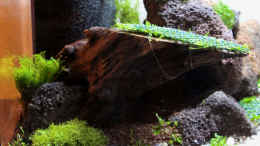aquarium-von-southamerica-tiny-green-nature_24.01.2015 linke Seite